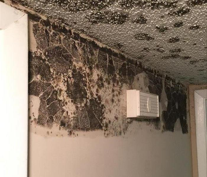 Mold Damage Goes Undetected!