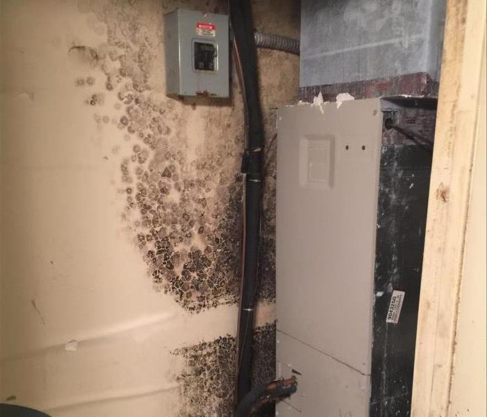 Broken pipe causes Mold Damage!